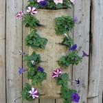 Цветы во дворе