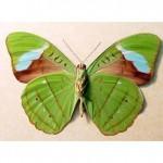 Коллекция бабочек для батика