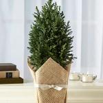 Как упаковать подарочные комнатные растения
