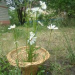 Плетёная ваза для садовой лужайки