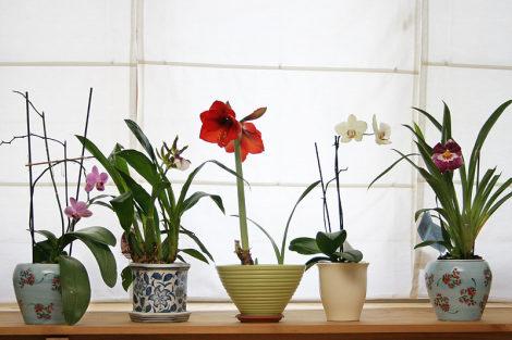 Домашние цветы, фен-шуй и трансформация энергетики