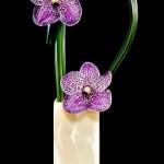 Изысканные цветочные композиции
