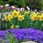 Весенние цветники в саду