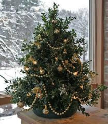 Самшитовые рождественские елки