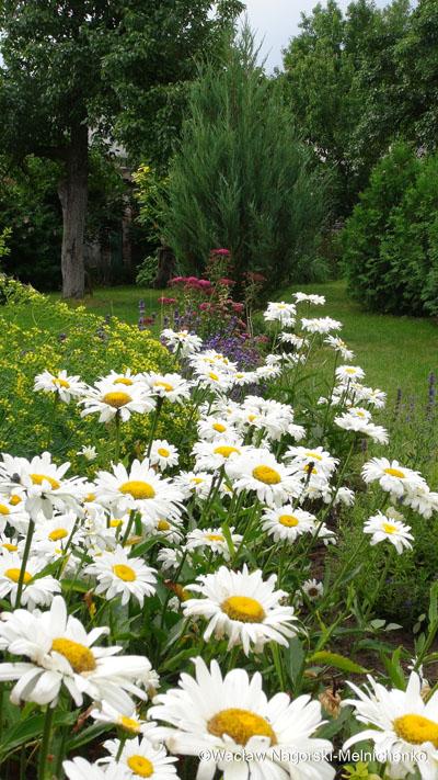 Парковый сад на дачном участке