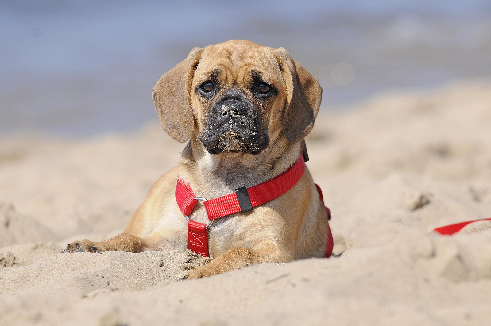 характеристики собаки породы