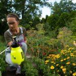 Листовая подкормка растений: 4 достоинства и 2 недостатка